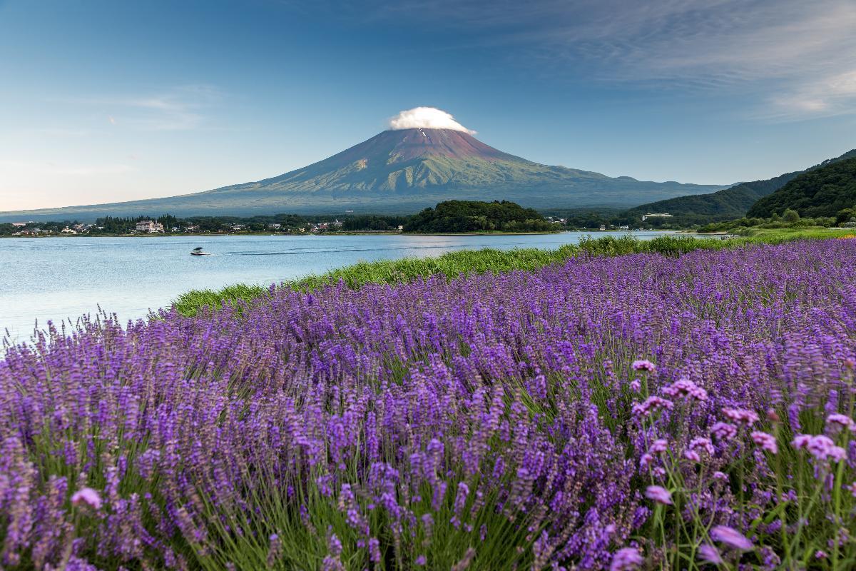 เก็บลูกพีช & เก็บเชอร์รี่! ชมวิวภูเขาไฟฟูจิจาก Kawaguchiko Herb Festival & ทานบาร์บีคิว! ☆ One Day Trip