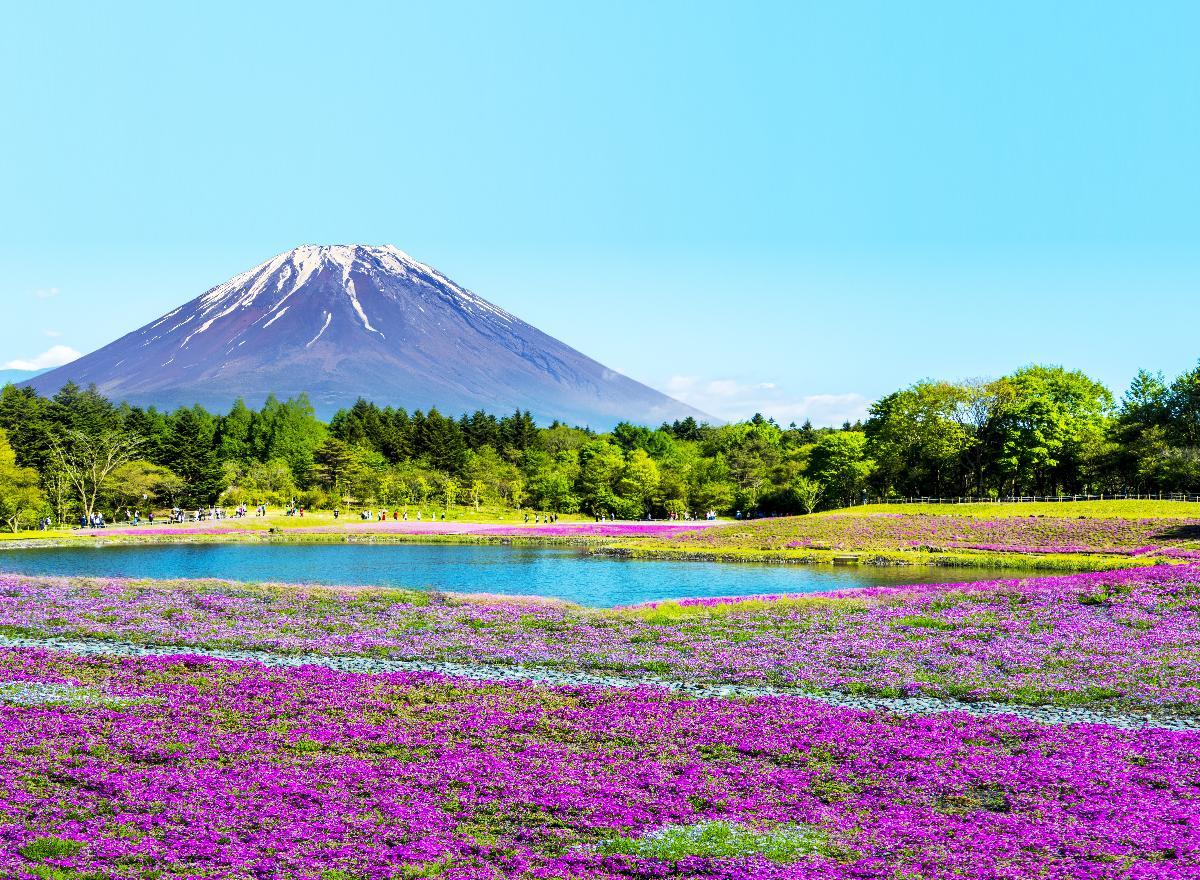 ญี่ปุ่น โตเกียว นาริตะ อิบารากิ ฟูจิ[เลทส์โก นินจาพิงค์มอส สปาร์ค] 5 D 3 N (BY XJ)